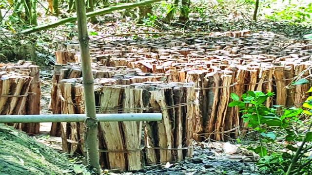 প্রভাবশালীদের দখলে চলে যাচ্ছে ঝিনাইগাতীর শাল-গজারি বন